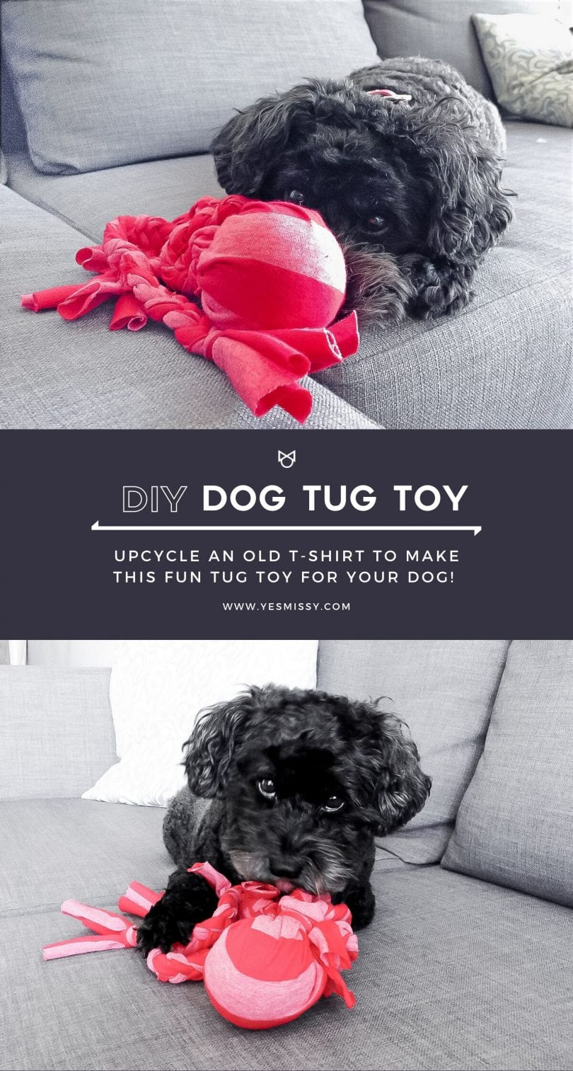 Make your own DIY dog toy with a tennis ball and an old t shirt!