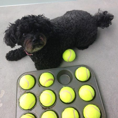 Your dog will love this fun treat game!