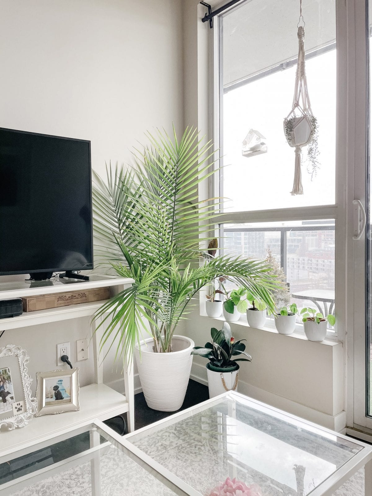 Downtown condo - plant corner with macrame hanging planter and potted plants